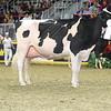 Royal16_Holstein_L32A4765