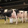 Royal16_Holstein_1M9A1201
