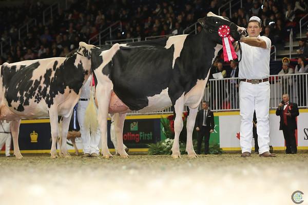 Royal16_Holstein_L32A4760