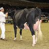 Royal16_Holstein_1M9A1168
