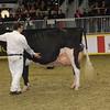 Royal16_Holstein_1M9A1419