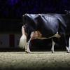 Royal16_Holstein_1M9A1512