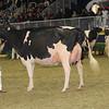Royal16_Holstein_1M9A1242