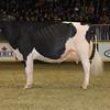 Royal16_Holstein_1M9A1699