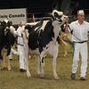Royal16_Holstein_1M9A1324
