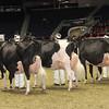Royal16_Holstein_1M9A1270