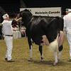 Royal16_Holstein_1M9A1271