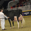 Royal16_Holstein_1M9A1427