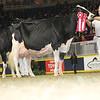 Royal16_Holstein_L32A4842