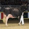 Royal16_Holstein_1M9A1476