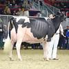 Royal16_Holstein_L32A4997