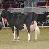Royal16_Holstein_1M9A1334