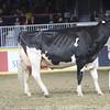 Royal16_Holstein_1M9A1461