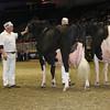 Royal16_Holstein_L32A4967