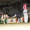 Royal16_Holstein_L32A4794