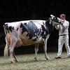 Royal16_Holstein_1M9A1488