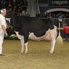 Royal16_Holstein_1M9A1700