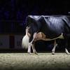 Royal16_Holstein_1M9A1514