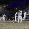 Royal16_Holstein_L32A4929