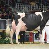Royal16_Holstein_L32A4973