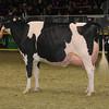 Royal16_Holstein_1M9A1773