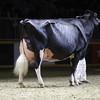 Royal16_Holstein_1M9A1521