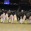 Royal16_Holstein_L32A4804