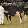 Royal16_Holstein_1M9A1341