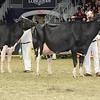 Royal16_Holstein_L32A4766