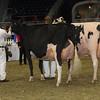 Royal16_Holstein_1M9A1450