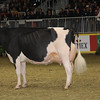 Royal16_Holstein_1M9A1678