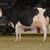 Royal16_Holstein_1M9A1687
