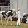 Royal16_Holstein_L32A4728