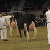 Royal16_Holstein_1M9A1429