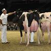 Royal16_Holstein_L32A4962
