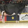 Royal16_Holstein_L32A4905