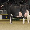 Royal16_Holstein_1M9A1692