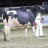 Royal16_Holstein_1M9A1462