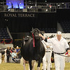 Royal16_Holstein_1M9A1314