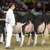 Royal16_Holstein_L32A4888