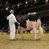 Royal16_Holstein_1M9A1184