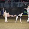 Royal16_Holstein_L32A4953