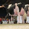 Royal16_Holstein_L32A4719