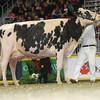 Royal16_Holstein_L32A4900