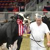 Royal16_Holstein_L32A4822