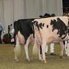 Royal16_Holstein_1M9A1442