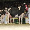Royal16_Holstein_L32A4761