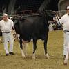Royal16_Holstein_1M9A1320
