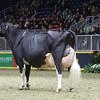 Royal16_Holstein_1M9A1726
