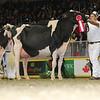 Royal16_Holstein_L32A4759